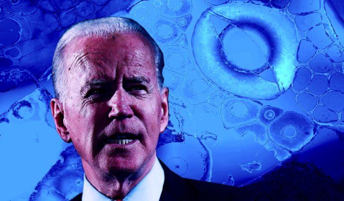 3 principales razones por las que los demócratas pierden las elecciones presidenciales 2020