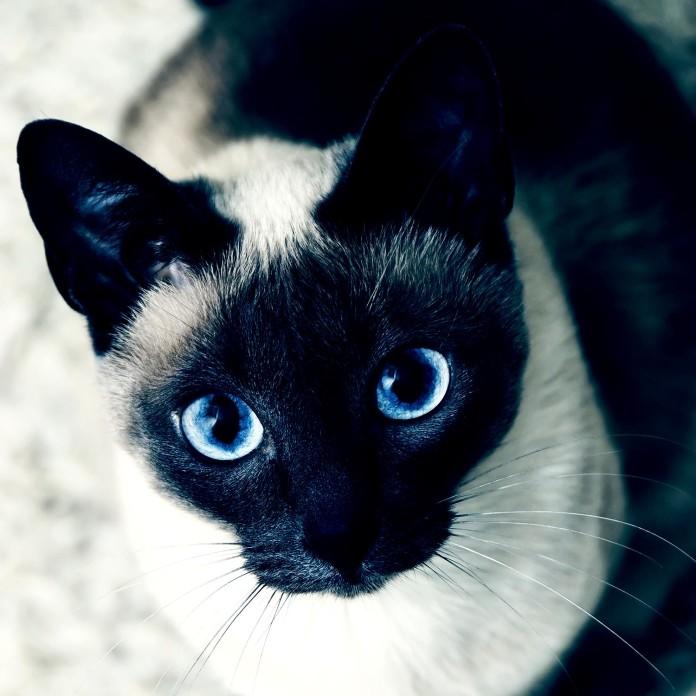 3. Barsik El gato